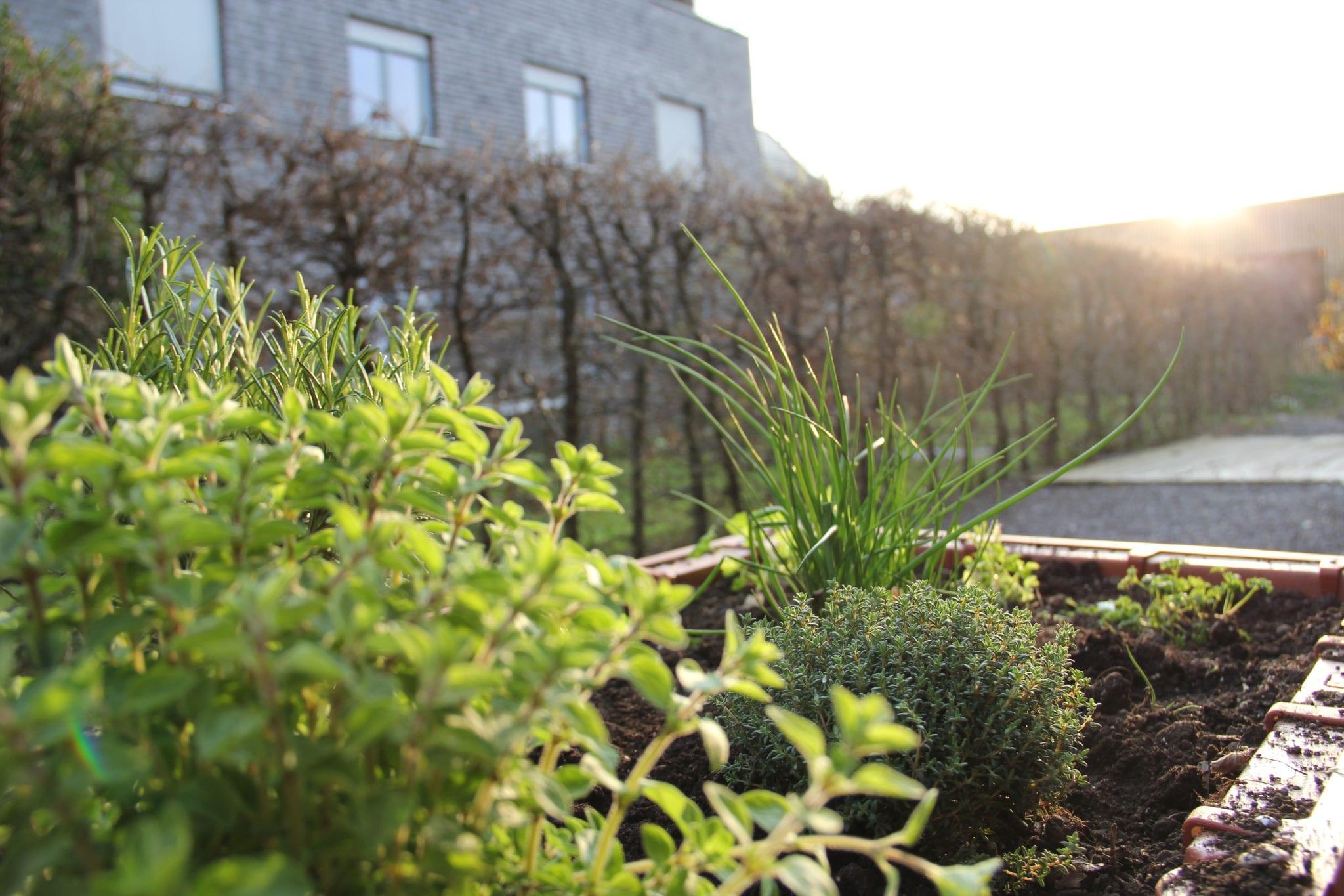 Garten Hochbeete erleichtern die Garten Pflege