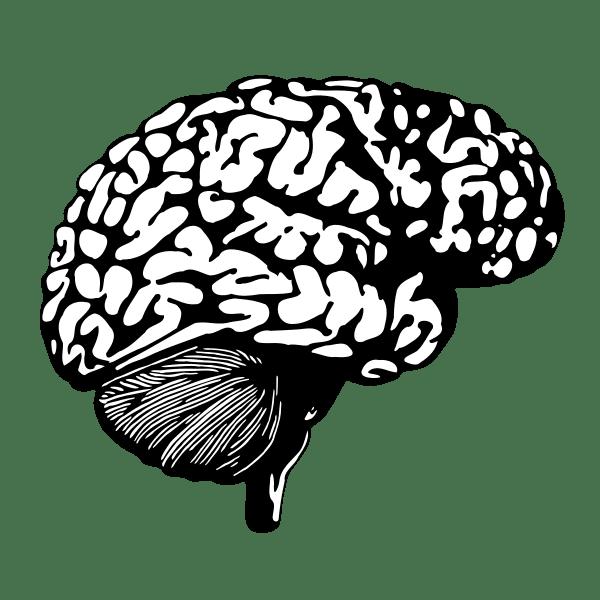 gehirn, brain