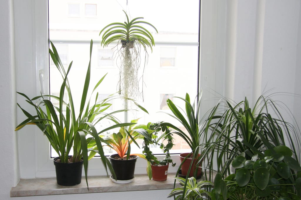 raumklima mit pflanzen verbessern besonders wichtig im. Black Bedroom Furniture Sets. Home Design Ideas