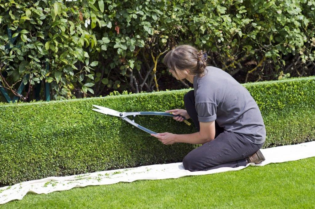 gärtnern-gartenarbeit