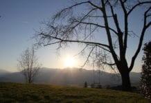 Baum Sonnenuntergang