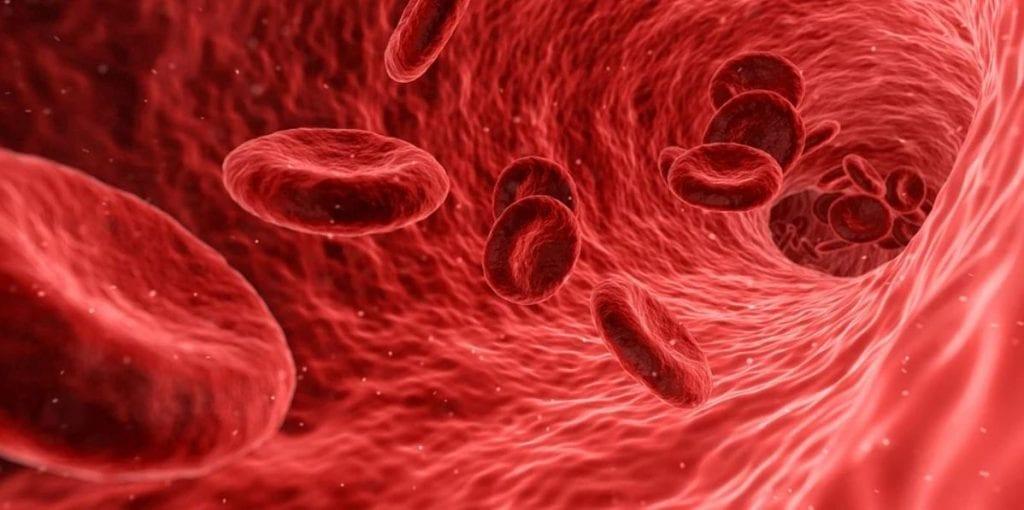 Blutbildung Vitamin B12