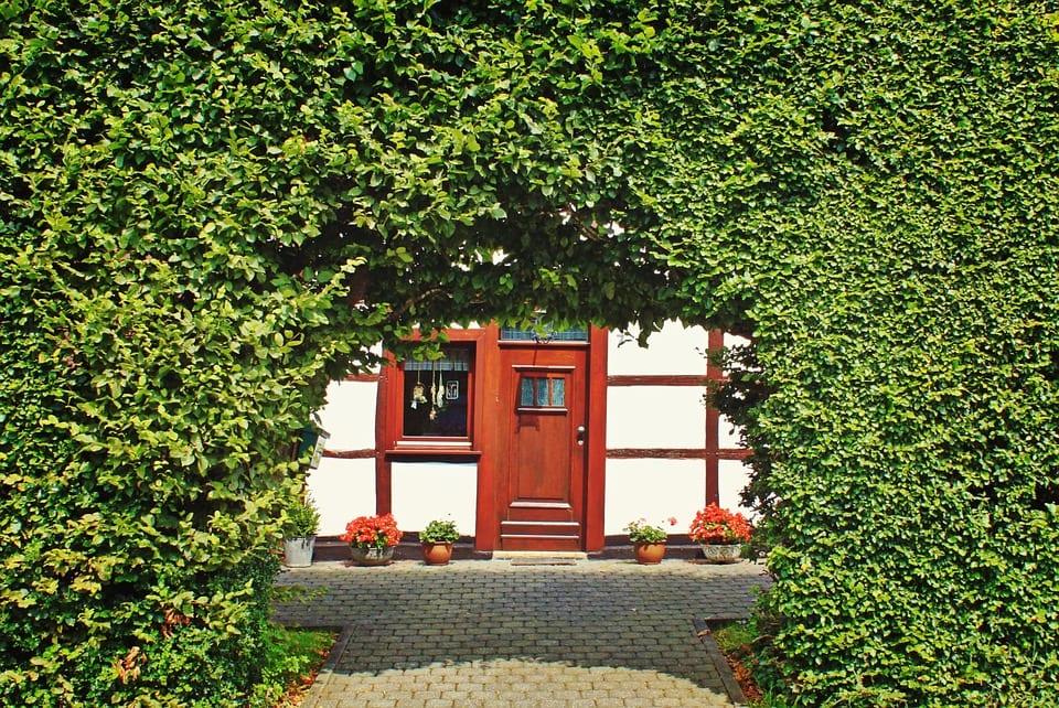Sichtschutz für den Garten: Diese Pflanzen eignen sich dafür