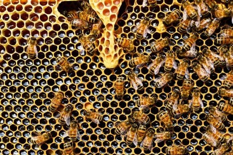 Biene Bienenstock